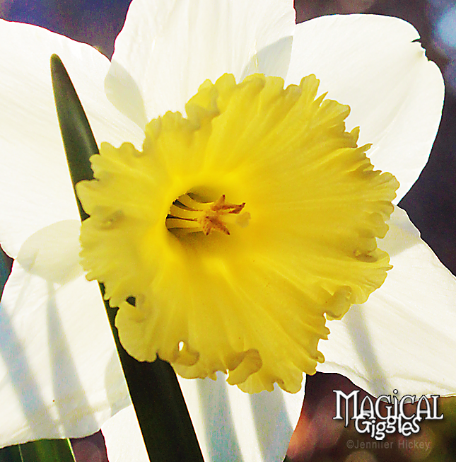 SpringFlowers2 - Copy