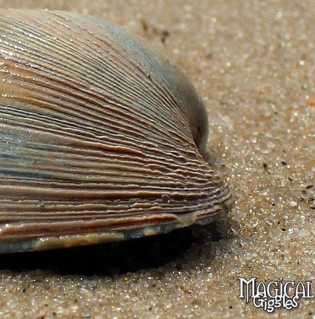I'm diggin' your textures lil sea mollusk.