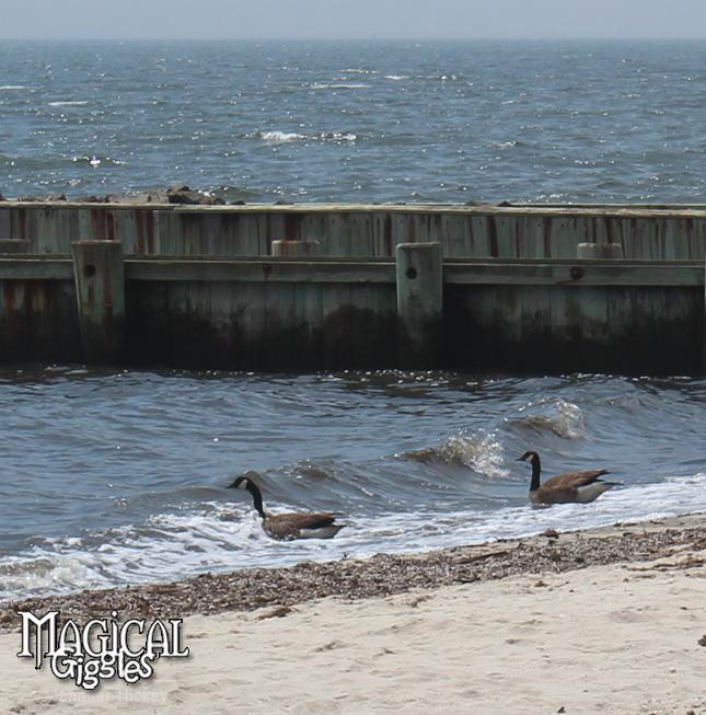 See Geese? Sea Geese. See?
