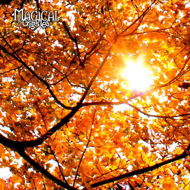 October Foliage.