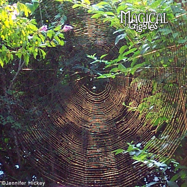 Massive spider web. Do you see a face in this picture, in the web? Pareidolia.