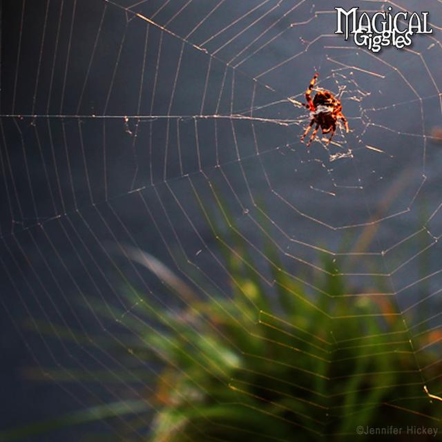 Web Sight.