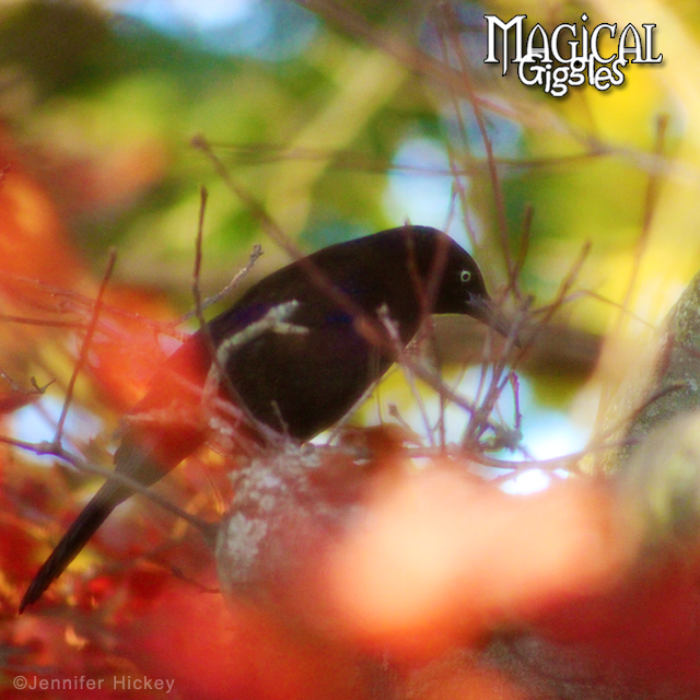 Bird Blur.